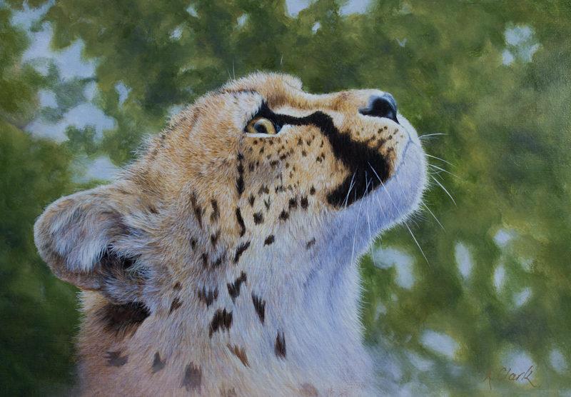 cheetah-dreams-by-alison-clark