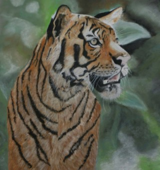 A Pastel painting by Beth Gibbeson in the Realist style  depicting Animals with main colour being Black Green and Orange and titled In the Wild (Tiger)