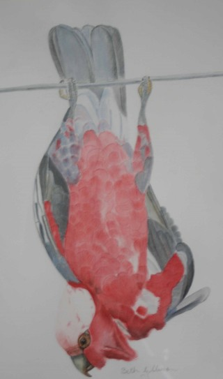 A Watercolour painting by Beth Gibbeson in the Realist style  depicting Animals Birds with main colour being Grey and Pink and titled Hanging Around (Galah)