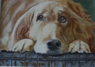 A Pastel painting by Beth Gibbeson in the Realist style  depicting Animals and Dogs with main colour being Cream Grey and Ochre and titled Sorry!