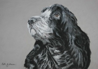 A Pastel painting by Beth Gibbeson in the Realist style  depicting Animals Dogs with main colour being Black Grey and White and titled Ruby