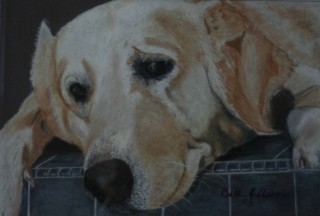 A Pastel painting by Beth Gibbeson in the Realist style  depicting Animals with main colour being Cream Grey and Ochre and titled Waiting!