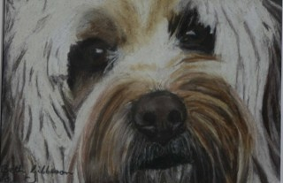 A Pastel painting by Beth Gibbeson in the Realist style  depicting Animals and Dogs with main colour being Black Brown and Cream and titled Scruffy