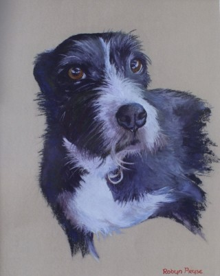 A Pastel painting by Robyn Pryse in the Realist style  depicting Animals Dogs with main colour being Black Grey and White and titled Jacko