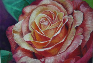 A Pastel painting by Robyn Pryse in the Realist style  depicting Flowers with main colour being Green Orange and Pink and titled Red Rose