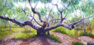 An Oil painting by Yvonne West in the Realist style  depicting Bush Trees with main colour being Blue Green and Pink and titled Coastal Angophora