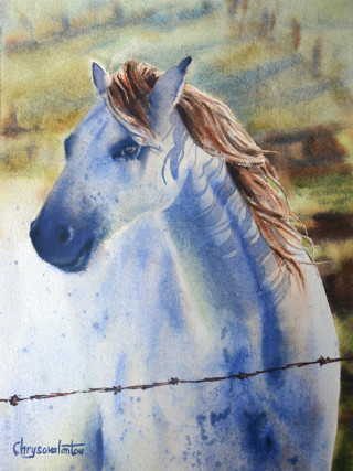 A Watercolour artwork by Chrysovalantou Mavroudis in the Realist Impressionist style  depicting Animals and Horses with main colour being Blue and Green and titled Mr Marble