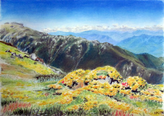 A Pastel artwork by Dane Ikin in the Realist style  depicting Landscape Flowers and Mountains with main colour being Blue and Yellow and titled Alpine Flowers