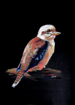 A Pastel painting by Dane Ikin in the Realist style  depicting Animals Birds with main colour being Black Brown and White and titled Kookaburra