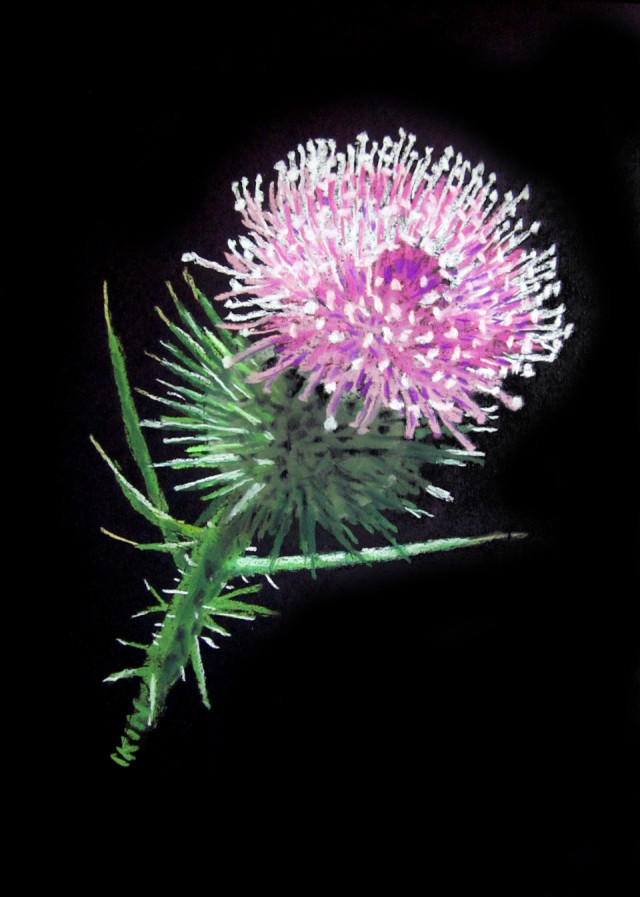 Pastel Painting by Dane Ikin titled Thistle