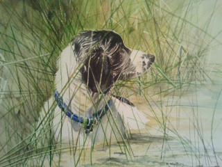 A Watercolour painting by Kathy Medbury in the Realist style  depicting Animals and Dogs with main colour being Black Cream and Green and titled Baxter