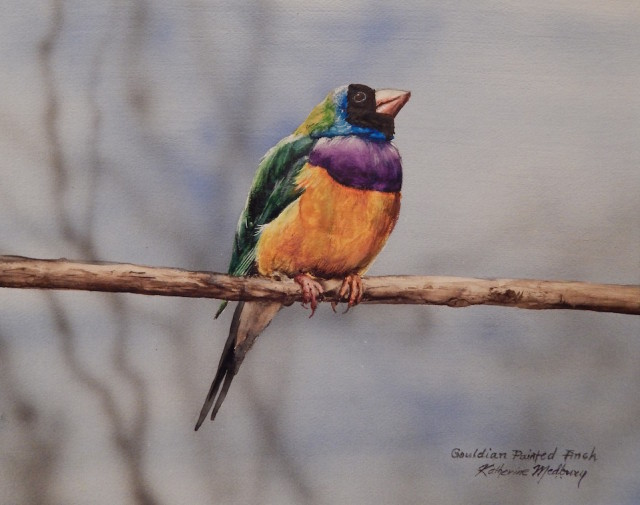 Painting by Kathy Medbury titled Golden Painted Finch