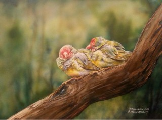 An Acrylic painting by Kathy Medbury in the Realist style  depicting Animals Birds with main colour being Brown and Olive and titled Red Faced Star Finch