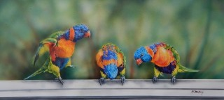 An Acrylic painting by Kathy Medbury in the Realist style  depicting Animals Birds with main colour being Blue Green and Orange and titled Lorikeets