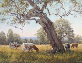 A Pastel artwork by Barbara Beasley-Southgate in the Realist style  depicting Landscape Animals Mountains and Rural with main colour being Blue Grey and Olive and titled Old Weathered Gum, Thornton