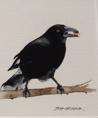 A Watercolour artwork by Jeff Gilmour in the Realist style  depicting Animals with main colour being Black and titled Lunch for a Currawong