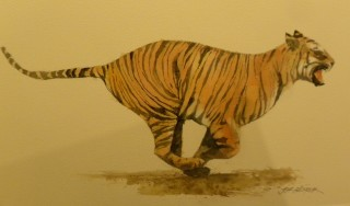 A Watercolour artwork by Jeff Gilmour in the Realist style  depicting Animals and Cats with main colour being Black and Orange and titled Tiger