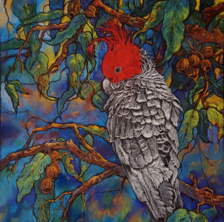 A Pastel artwork by Helen Miles in the Realist Impressionist style  depicting Animals Birds Bush and Rural with main colour being Blue Green and Red and titled Gang Gang Cockatoo