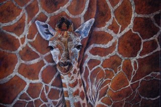 A Pastel artwork by Helen Miles in the Realist style  depicting Animals with main colour being Black Brown and Orange and titled Close to Mum