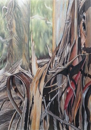 A Coloured Pencils painting by Michelle Ripari in the Realist style  depicting Bush and Trees with main colour being Brown Grey and Ochre and titled Enduring Stillness
