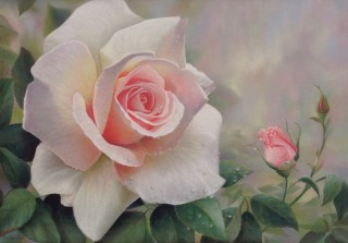 A Pastel painting by Maureen Bainbridge in the Realist style  depicting Flowers with main colour being Olive and Pink and titled The Essence of Spring