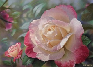 A Pastel painting by Maureen Bainbridge in the Realist style  depicting Flowers with main colour being Grey Olive and Pink and titled Double Delight