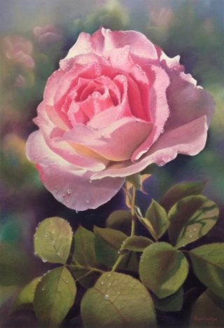 A Pastel painting by Maureen Bainbridge in the Realist style  depicting Flowers with main colour being Grey Olive and Pink and titled Early Morning Dew