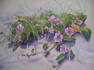 A Pastel painting by Maureen Bainbridge in the Realist style  depicting Flowers Beach with main colour being Green Grey and Pink and titled Beach Morning Glory
