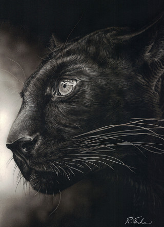 A Scratchboard painting by Rikki Fisher in the Realist style  depicting Animals and Cats with main colour being Black and titled Dark Intent