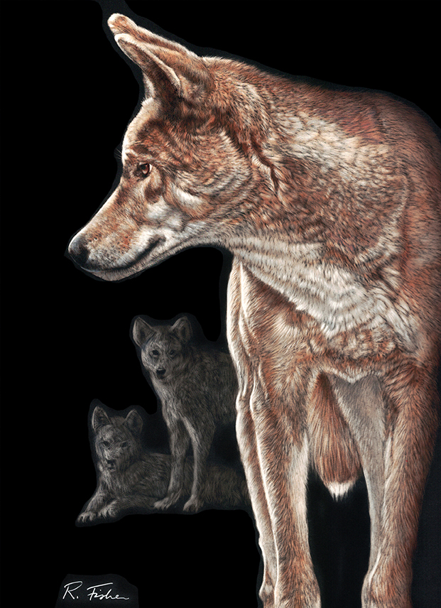 Scratchboard Painting by Rikki Fisher titled Leader of the Pack