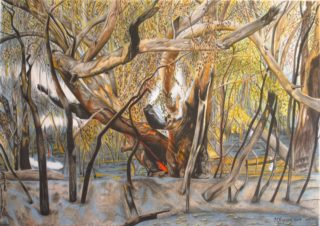 A Coloured Pencils painting by Michelle Ripari in the Realist style  depicting Landscape Bush and Trees with main colour being Black Brown and Green and titled Death of a Gum Tree