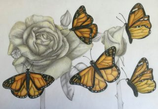 A Pencil drawing by Katharine Gorry in the Realist style  depicting Flowers with main colour being Black Brown and Cream and titled Monarch of Butterflies