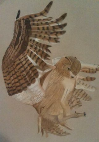 A Pastel artwork by Katharine Gorry in the Realist style  depicting Animals Birds with main colour being Black Brown and Ochre and titled Owl In Flight