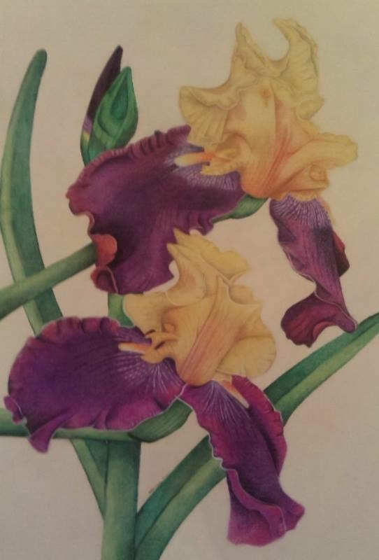 Pastel Painting by Katharine Gorry titled Bearded Iris's