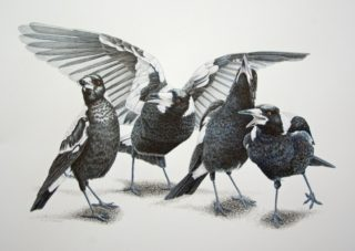 A Coloured Pencils painting by Janet Matthews in the Realist style  depicting Animals Birds with main colour being Black Grey and White and titled Magpies Quartet