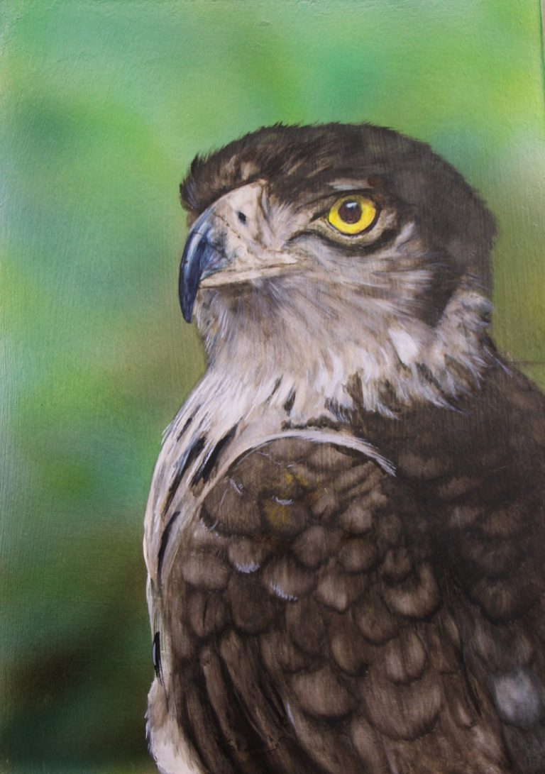 Watercolour Painting by Angela Parr titled In My Sight (African Snake Eagle)