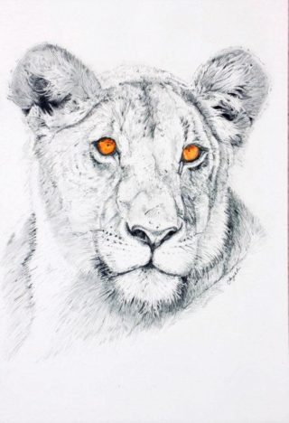 A Pencil drawing by Angela Parr in the Realist style  depicting Animals with main colour being Black Grey and White and titled Lioness
