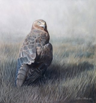 An Oil painting by William Ritchie in the Realist style  depicting Animals Birds and Outback with main colour being Blue Grey and Ochre and titled Australasian Harrier