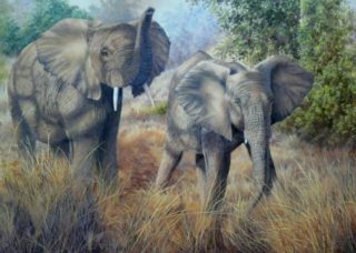 An Oil painting by Alison Clark in the Realist style  depicting Animals and Bush with main colour being Brown Grey and Ochre and titled Elephants at Edeni