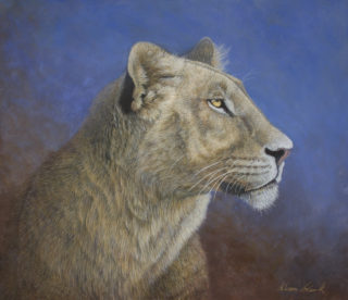 An Acrylic painting by Alison Clark in the Realist style  depicting Animals Bush and Cats with main colour being Blue Brown and Cream and titled The Lioness Awakens