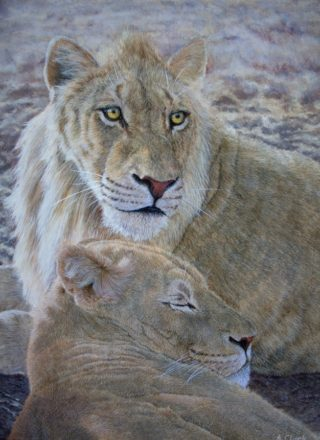 An Acrylic painting by Alison Clark in the Realist style  depicting Animals Bush and Cats with main colour being Brown Gold and Ochre and titled Morning Rest for Two Siblings