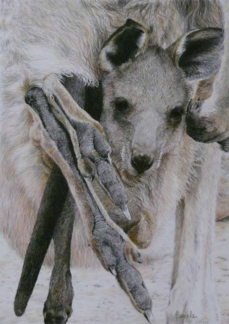 Coloured Pencils Painting by Sandra Temple titled Legs Eleven