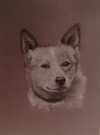 A Pastel painting by Connie Wharton in the Realist style  depicting Animals Dogs with main colour being Brown and Grey and titled Portrait of a Dog