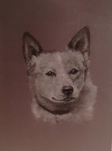 Pastel Painting by Connie Wharton titled Portrait of a Dog