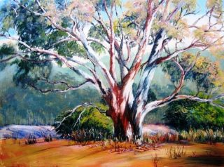 An Acrylic painting by Yvonne West in the Realist Impressionist style  depicting Bush and Trees with main colour being Blue Green and Orange and titled Riverina Gum