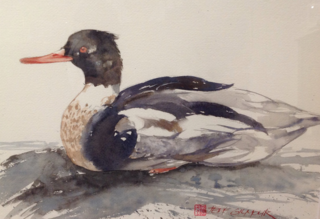 A Watercolour artwork by Jeff Gilmour in the Realist style  depicting Animals Birds with main colour being Grey and Orange and titled Red Breasted Meranser