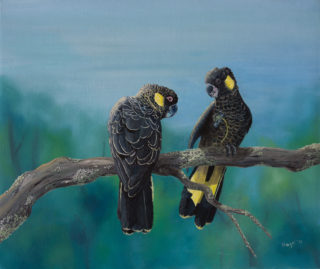 An Oil painting by Hazel Howie in the Realist style  depicting Animals and Birds with main colour being Black Blue and Green and titled Yellow Tailed Black Cockatoos