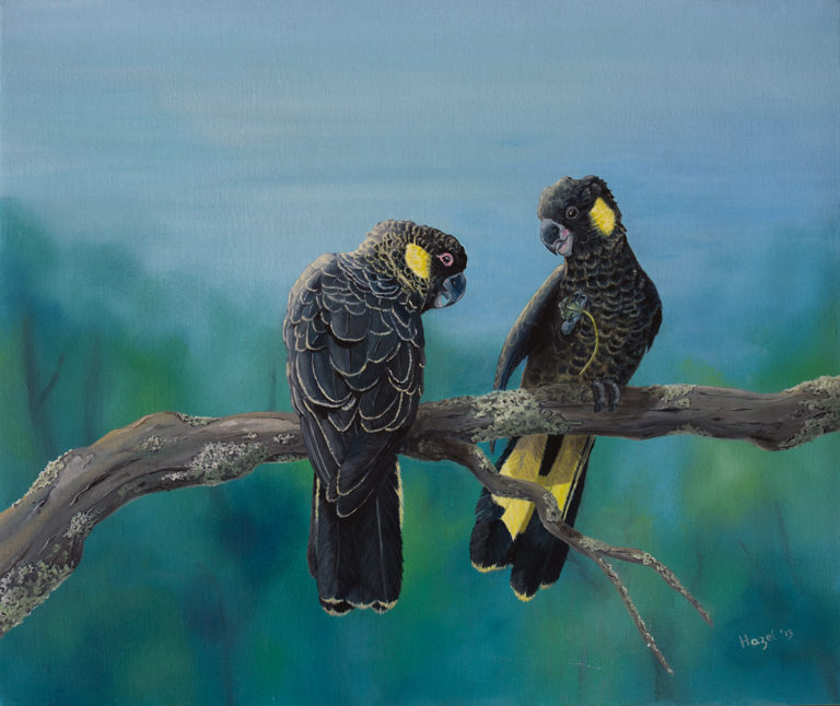 Oil Painting by Hazel Howie titled Yellow Tailed Black Cockatoos