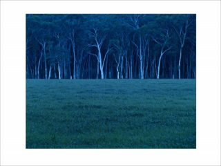 A  photograph by Philip Bell depicting Landscape Trees with main colour being Black Blue and Green and titled Megalong Dusk 1