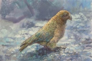A Pastel painting by Penelope Gilbert-Ng in the Realist Impressionist style  depicting Animals Birds with main colour being Blue Grey and Ochre and titled Kea